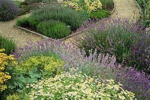 semințe de plante aromate