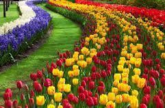 Lalele - Tulips grupa 1