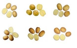 Cartofi de sămânță - albi