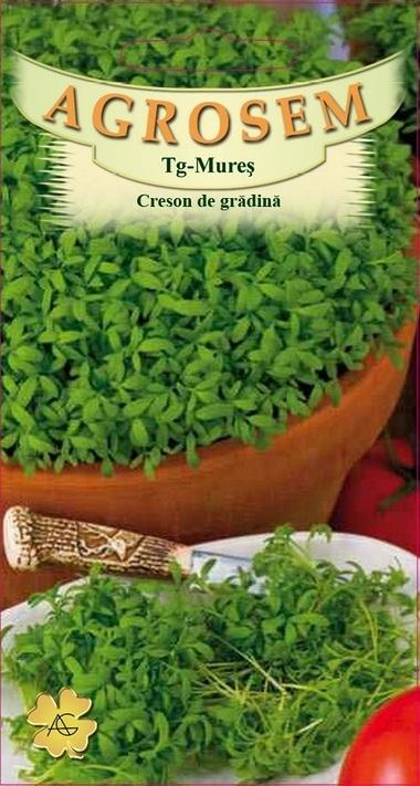 Creson de grădină