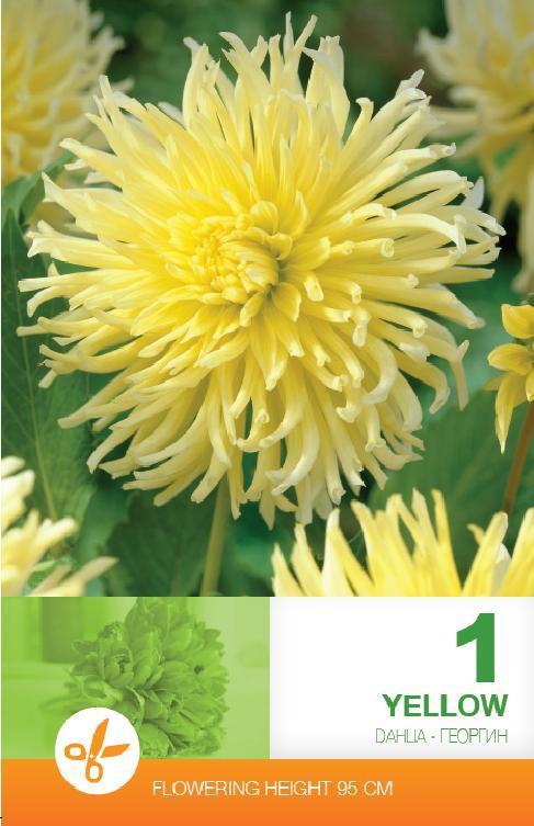 Dalia - Cactus Yellow