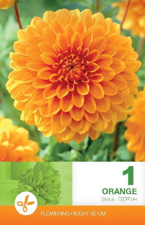 Dalia - Decorative Orange