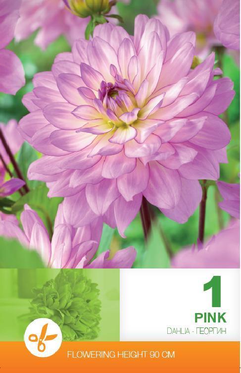 Dalia - Decorative Pink