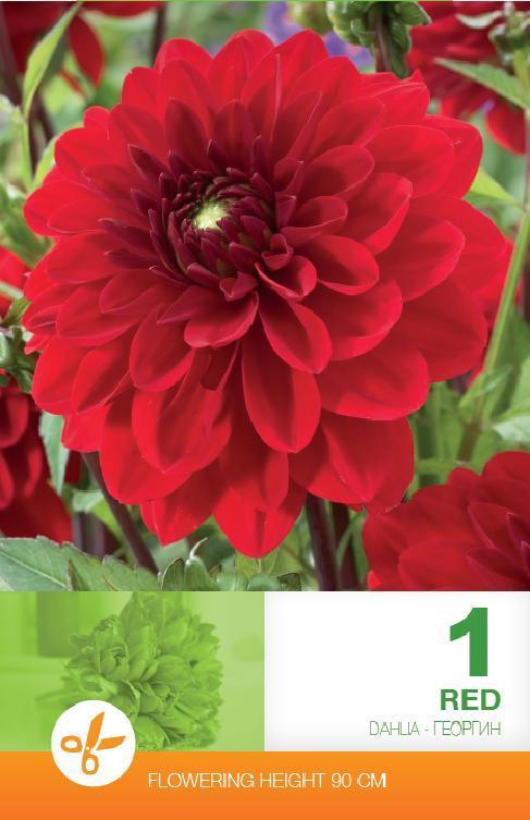 Dalia - Decorative Red