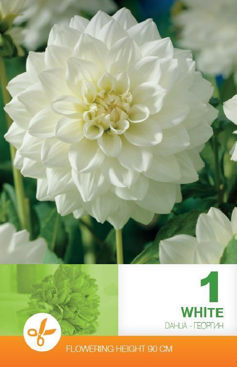 Dalia - Decorative White