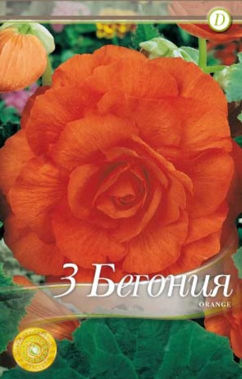 Begonie - Double Orange