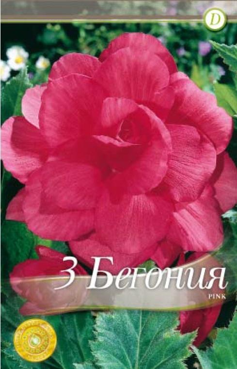 Begonie - Double Pink