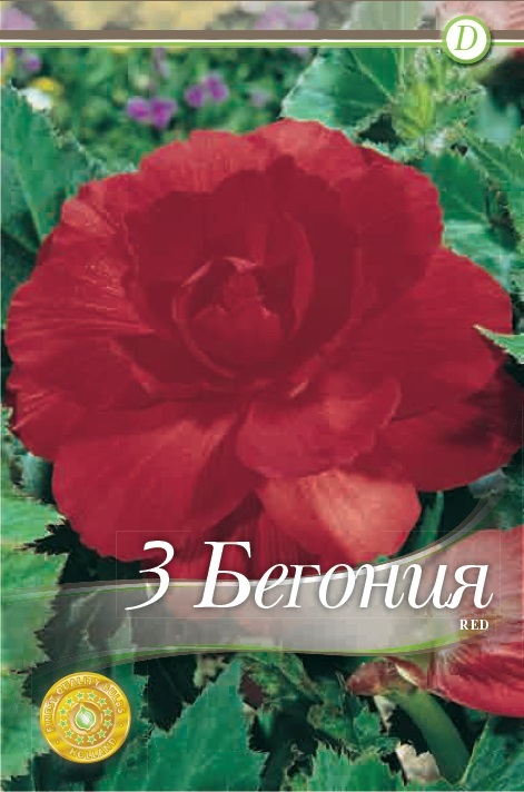 Begonie - Double Red