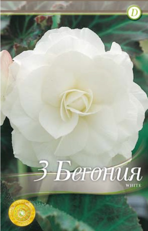Begonie - Double White