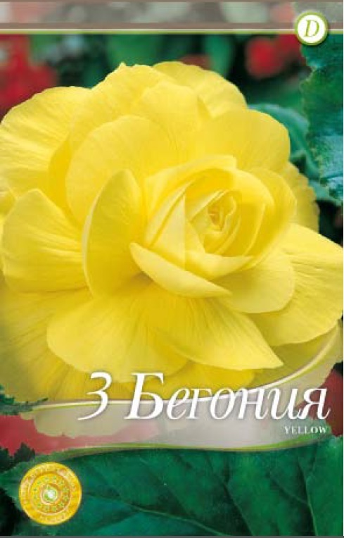 Begonie - Double Yellow