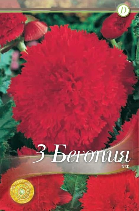 Begonie - Fimbriata Red
