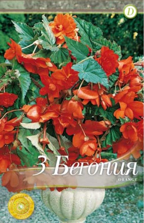 Begonie - Pendula Orange