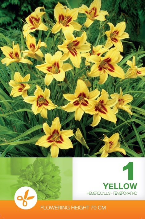 Hemerocallis - Yellow