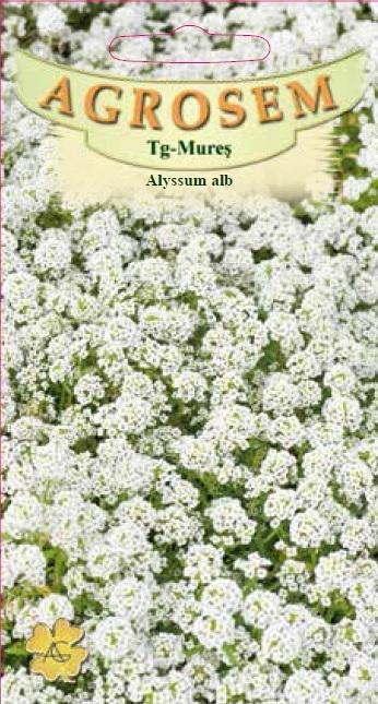 Alyssum alb