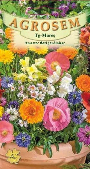 Amestec flori jardiniere