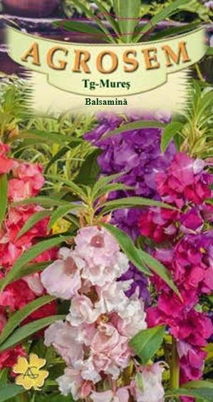 Balsamină