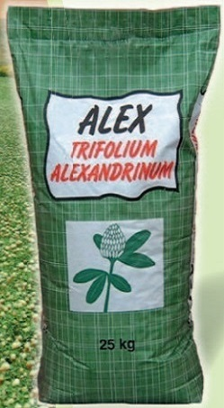 Trifoi de Alexandria