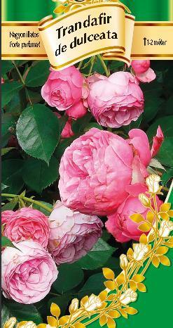 Trandafir de dulceaţă