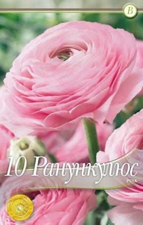 ranunculus - pink