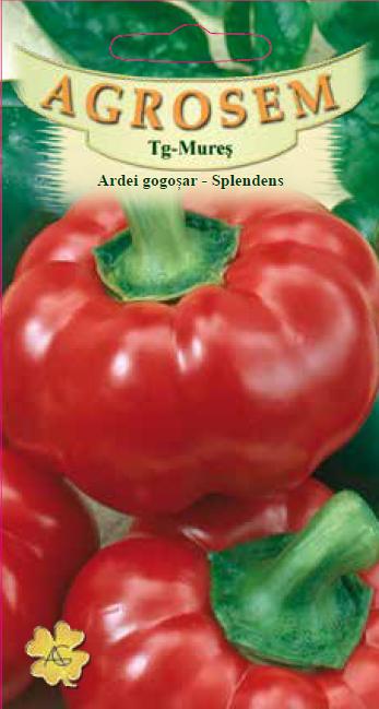 Ardei gogoşar - Splendens