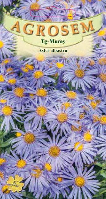 Aster albastru